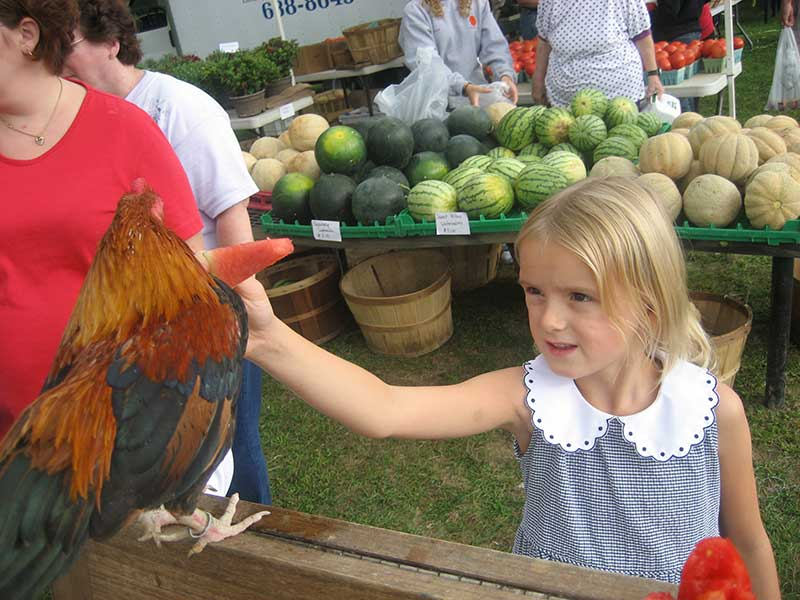 little girl on farm looking at a hen