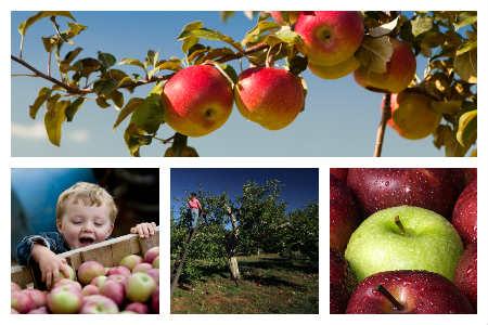 apple-collage.jpg