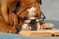 dog-reading.jpg