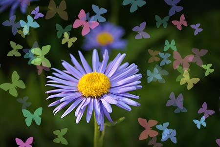 flower-butterflies