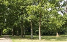 clifton park trees
