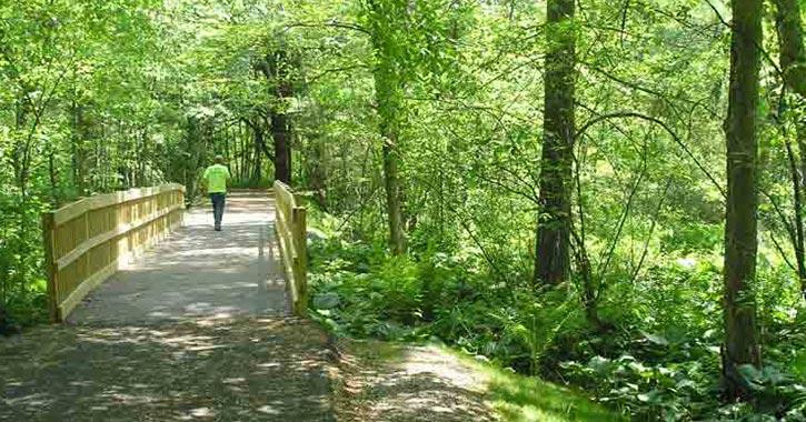a bridge through a green park