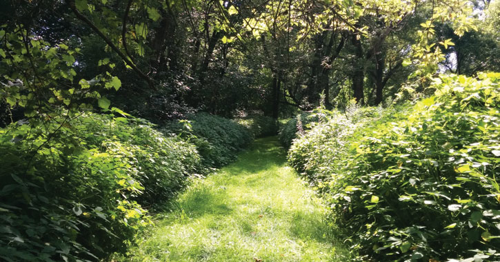 a grassy trail