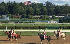 horses at the track