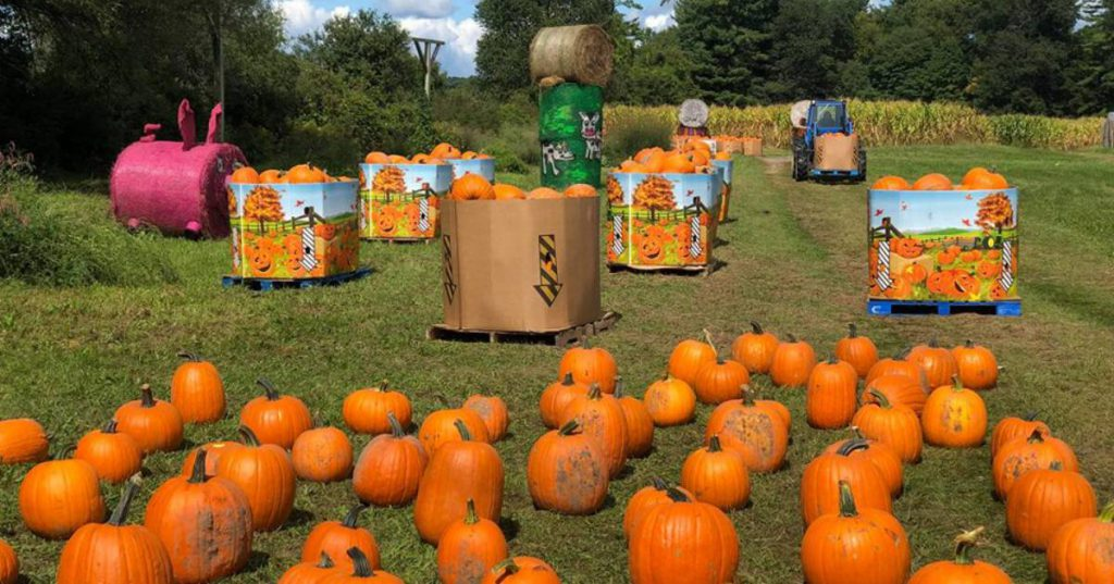pumpkin patch and displays