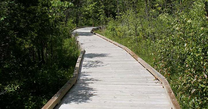 wooden bridge along trail