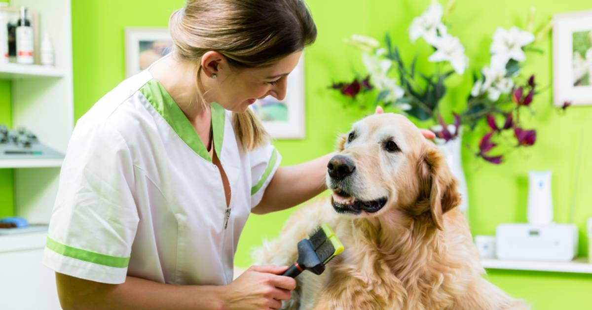 woman grooming a dog