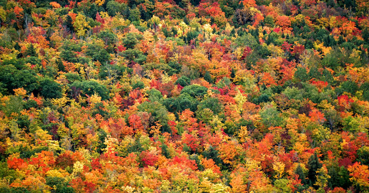 a large cluster of trees with fall foliage
