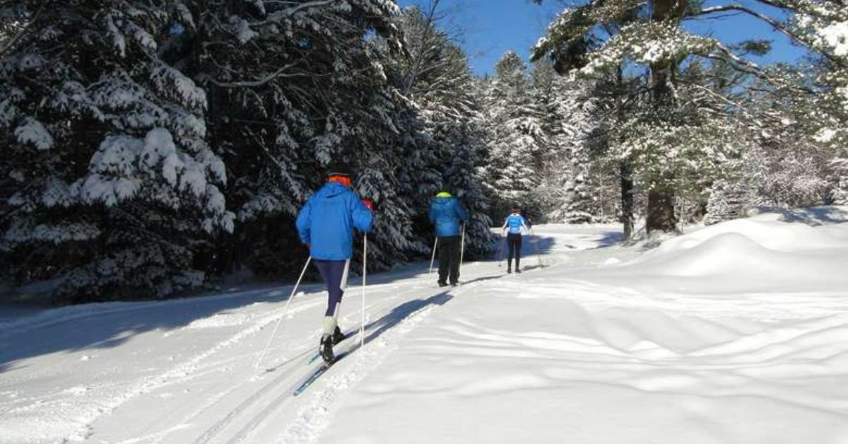 a small group cross country skiing into the woods