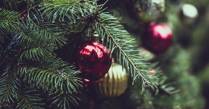 Choose Cut Your Own Christmas Tree In The Clifton Park Area