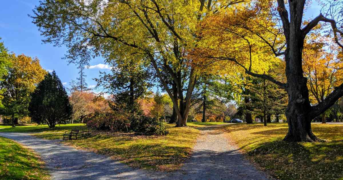 walkway in park and trees with fall colors